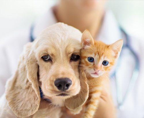 Presentation metier assistant veterinaire